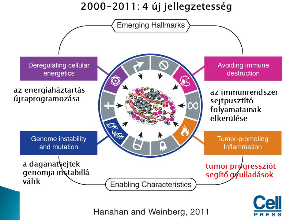 2000-2011: 4 új jellegzetesség az energiaháztartás újraprogramozása az immunrendszer sejtpusztító folyamatainak elkerülése a daganatsejtek genomja ins