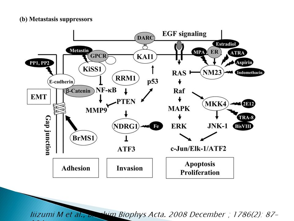 Iiizumi M et al., Biochim Biophys Acta. 2008 December ; 1786(2): 87– 104.
