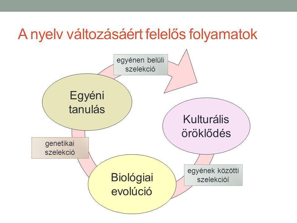 A nyelv változásáért felelős folyamatok Kulturális öröklődés Biológiai evolúció Egyéni tanulás genetikai szelekció egyénen belüli szelekció egyének közötti szelekcióí