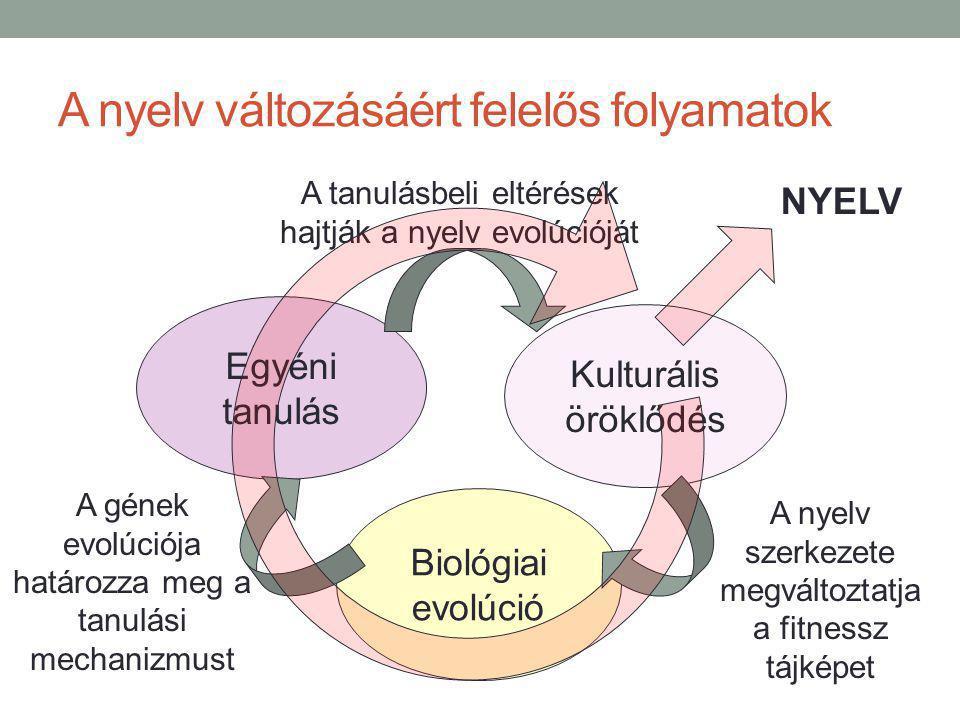 A nyelv változásáért felelős folyamatok Egyéni tanulás Kulturális öröklődés Biológiai evolúció NYELV A tanulásbeli eltérések hajtják a nyelv evolúcióját A nyelv szerkezete megváltoztatja a fitnessz tájképet A gének evolúciója határozza meg a tanulási mechanizmust