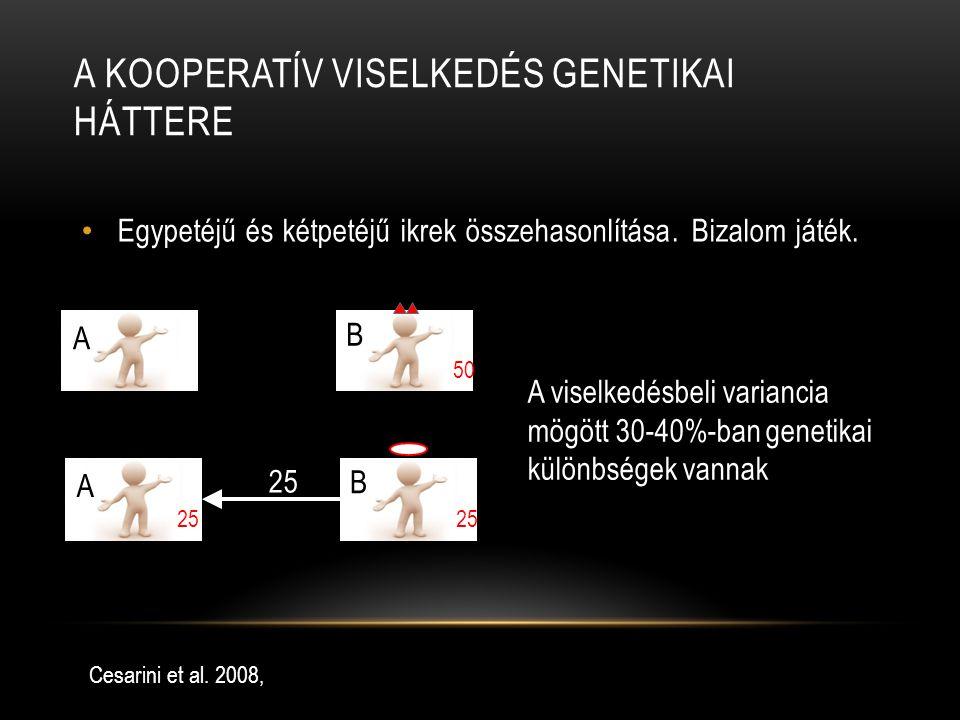 A KOOPERATÍV VISELKEDÉS GENETIKAI HÁTTERE Egypetéjű és kétpetéjű ikrek összehasonlítása. Bizalom játék. Cesarini et al. 2008, 50 A B 25 A B A viselked