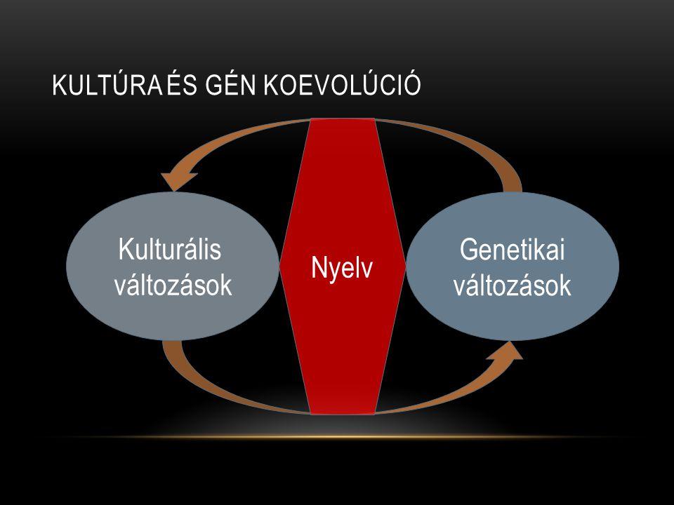 KULTÚRA ÉS GÉN KOEVOLÚCIÓ Genetikai változások Nyelv Kulturális változások
