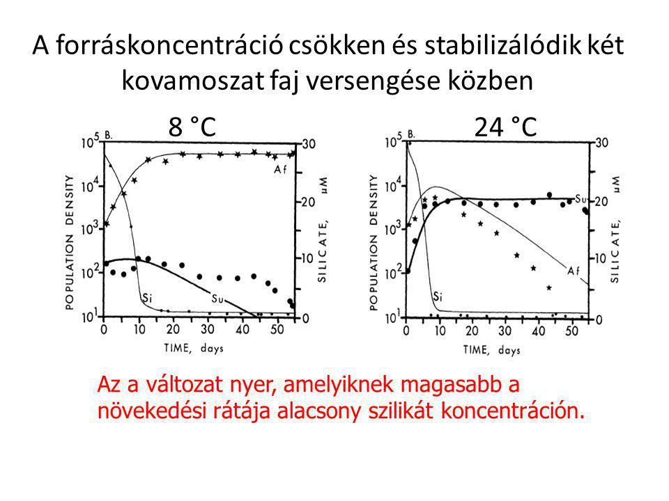 A forráskoncentráció csökken és stabilizálódik két kovamoszat faj versengése közben 8 °C24 °C Az a változat nyer, amelyiknek magasabb a növekedési rát