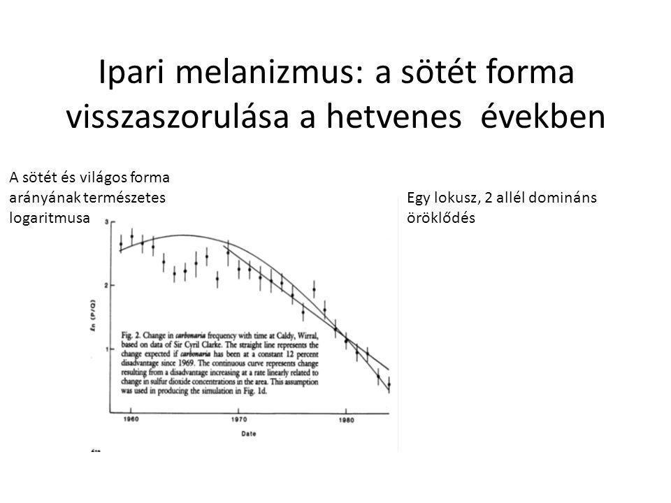 Ipari melanizmus: a sötét forma visszaszorulása a hetvenes években A sötét és világos forma arányának természetes logaritmusa Egy lokusz, 2 allél domináns öröklődés