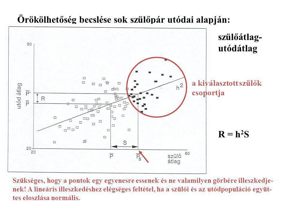 Örökölhetőség becslése sok szülőpár utódai alapján: szülőátlag- utódátlag regresszióval b = h 2 R = h 2 S Szükséges, hogy a pontok egy egyenesre essen