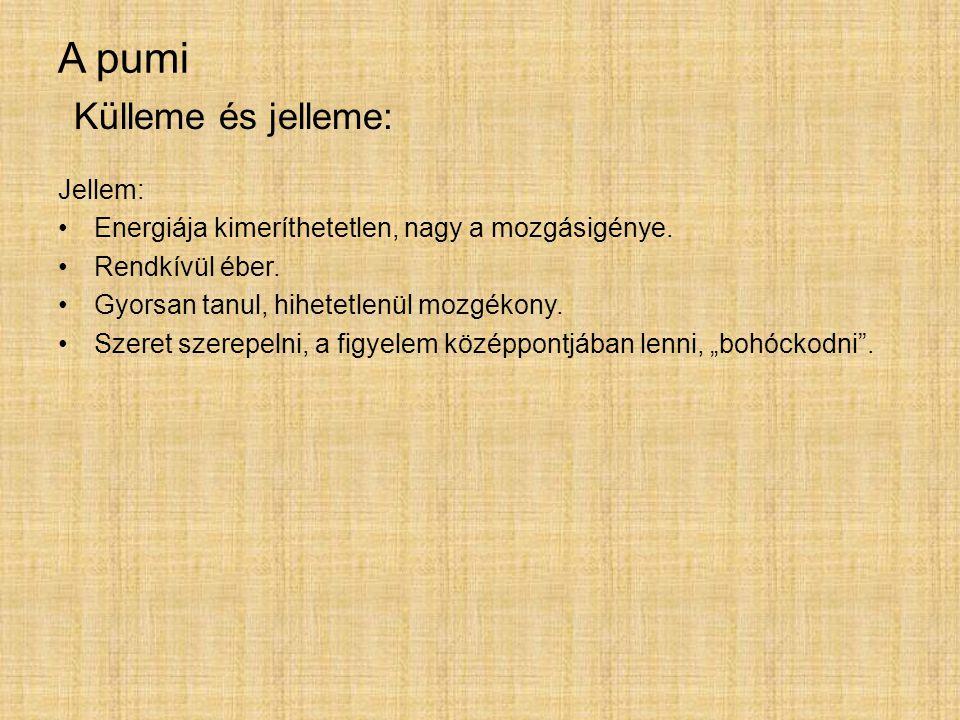 A pumi Jellem: Energiája kimeríthetetlen, nagy a mozgásigénye. Rendkívül éber. Gyorsan tanul, hihetetlenül mozgékony. Szeret szerepelni, a figyelem kö