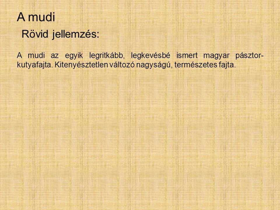 A mudi A mudi az egyik legritkább, legkevésbé ismert magyar pásztor- kutyafajta. Kitenyésztetlen változó nagyságú, természetes fajta. Rövid jellemzés: