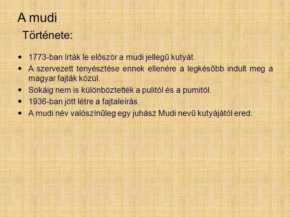 A mudi 1773-ban írták le először a mudi jellegű kutyát. A szervezett tenyésztése ennek ellenére a legkésőbb indult meg a magyar fajták közül. Sokáig n