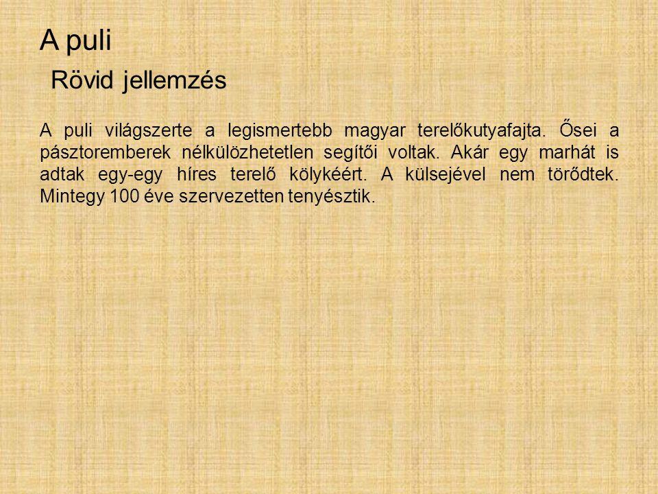 A puli A puli világszerte a legismertebb magyar terelőkutyafajta. Ősei a pásztoremberek nélkülözhetetlen segítői voltak. Akár egy marhát is adtak egy-