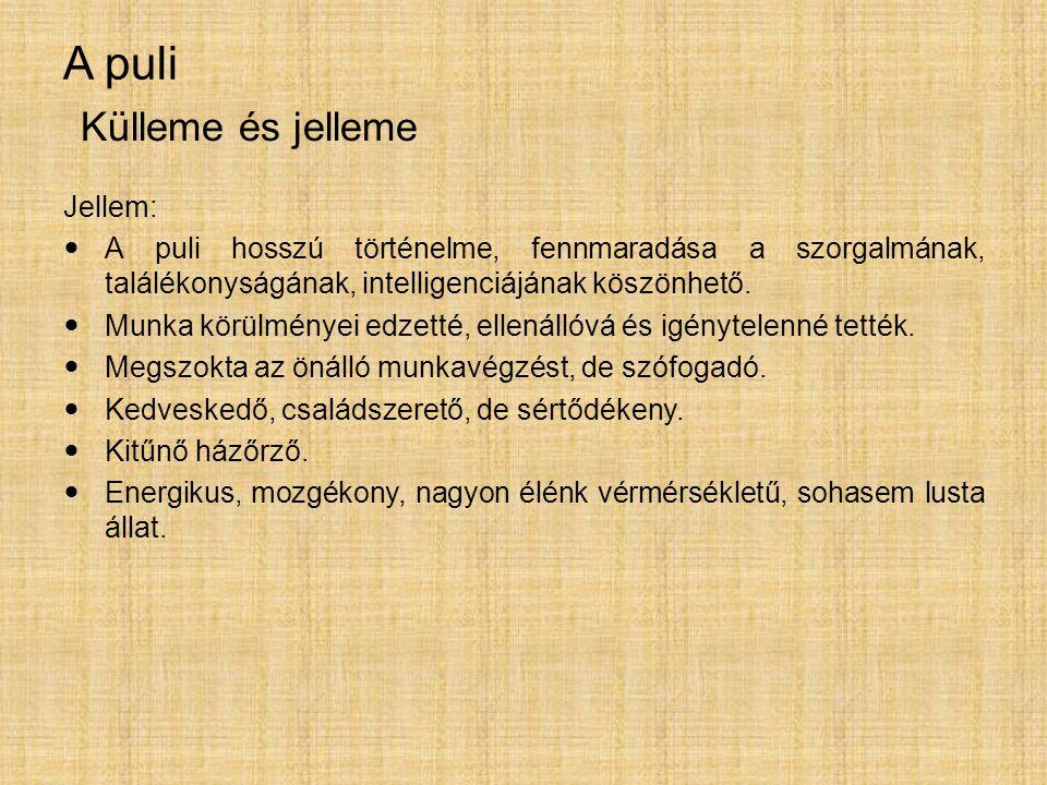 A puli Jellem: A puli hosszú történelme, fennmaradása a szorgalmának, találékonyságának, intelligenciájának köszönhető. Munka körülményei edzetté, ell