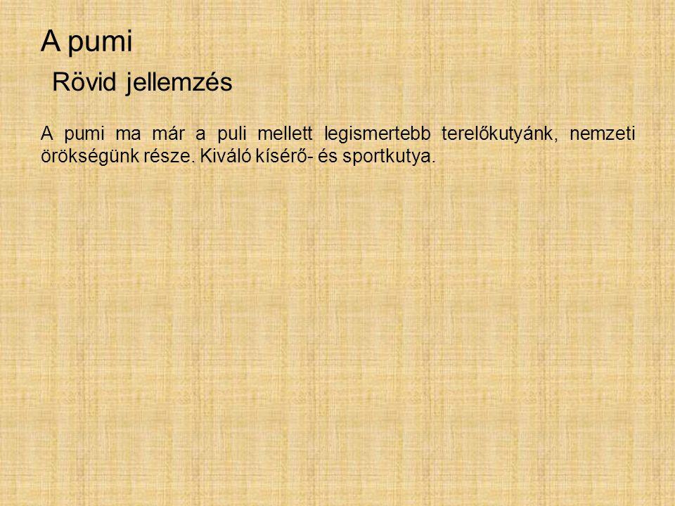 A pumi A pumi ma már a puli mellett legismertebb terelőkutyánk, nemzeti örökségünk része. Kiváló kísérő- és sportkutya. Rövid jellemzés
