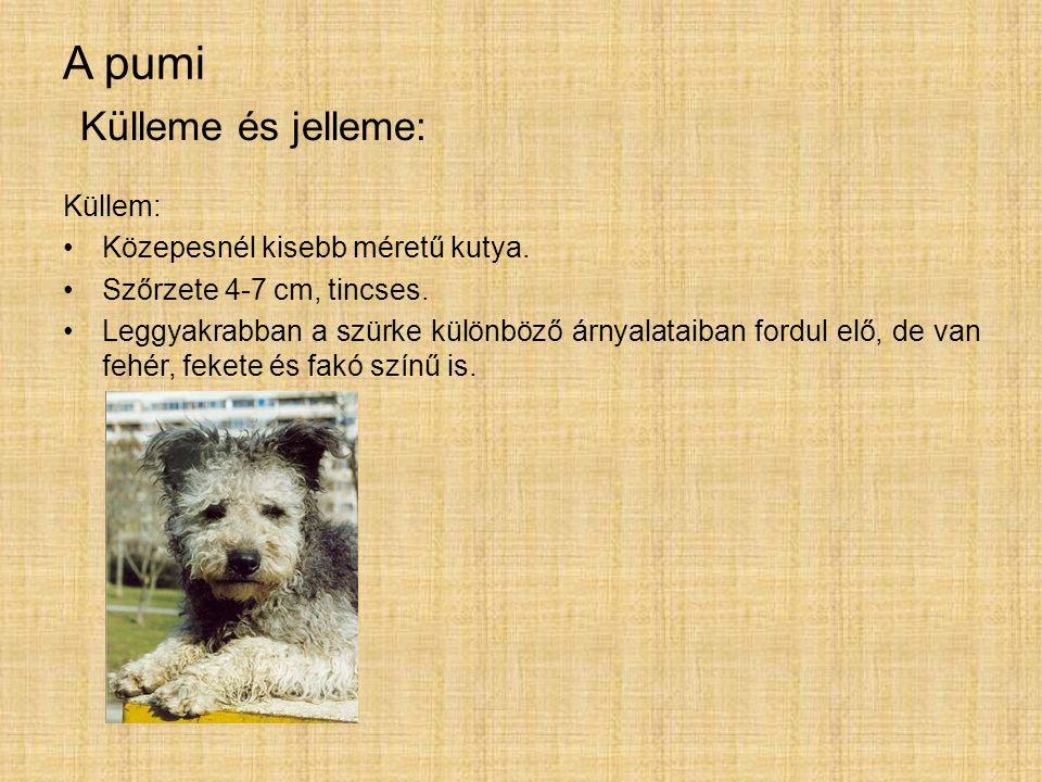 A pumi Küllem: Közepesnél kisebb méretű kutya. Szőrzete 4-7 cm, tincses. Leggyakrabban a szürke különböző árnyalataiban fordul elő, de van fehér, feke