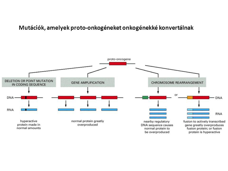 Mutációk, amelyek proto-onkogéneket onkogénekké konvertálnak