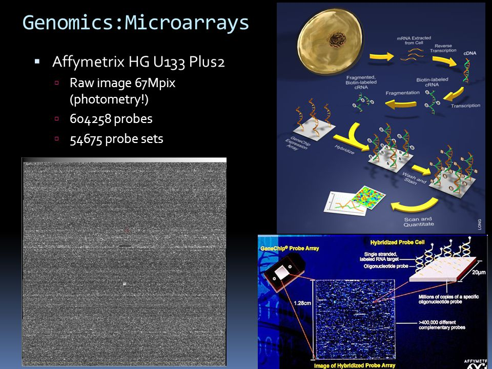 Genomics:Microarrays  Affymetrix HG U133 Plus2  Raw image 67Mpix (photometry!)  604258 probes  54675 probe sets