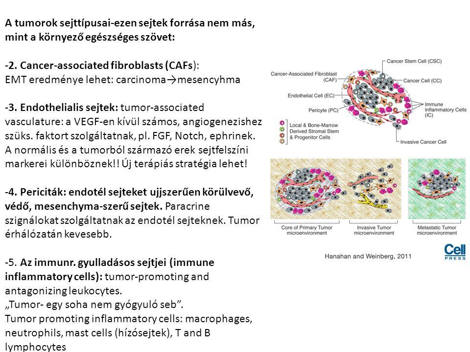 Az immune inflammatory sejtek által termelt faktorok: -EGF, VEGF, FGF2 (angiogenic), -chemokines, cytokines that amplify the inflammatory state -matrix metalloproteinases (MMP-9, invasion) A tumorokban myeloid progenitor sejteket is meghatároztak: -ezek csontvelői eredetűek, fejlődési állapotuk a csontvelői és a periféria közötti, egy populációjuk (makrofág CD11b és neutrofil Gr1 markereket koexpresszáló) képes a CTL-ek és NK sejtek szuppresszálására (ők nem azonosak a MDSCs-kel, azaz myeloid dervied suppressor cells).