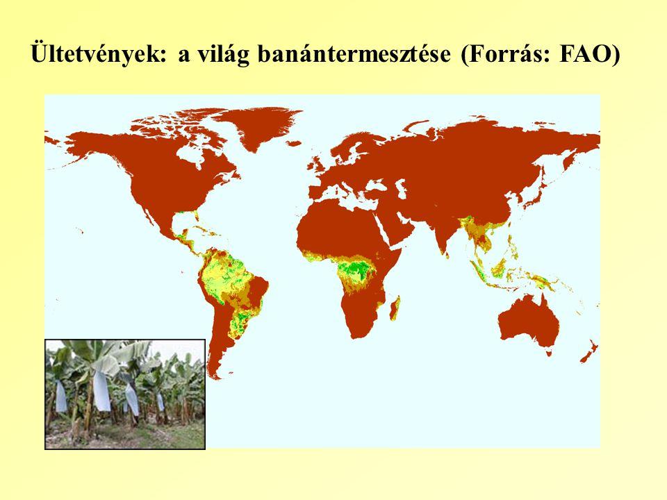 Ültetvények: a világ banántermesztése (Forrás: FAO)