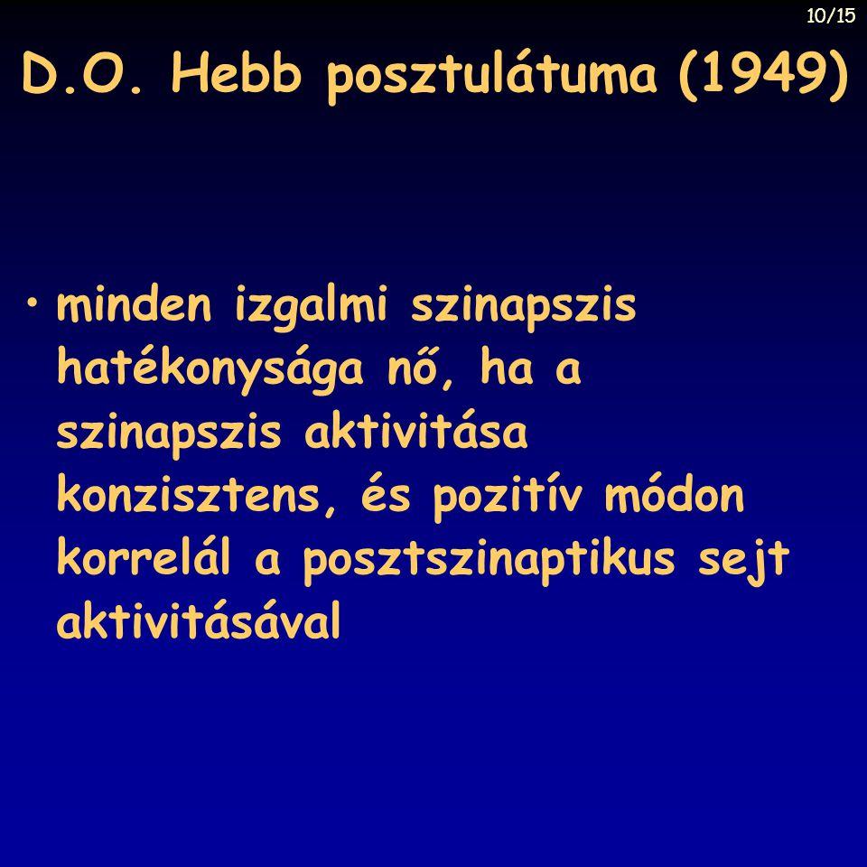 D.O. Hebb posztulátuma (1949) minden izgalmi szinapszis hatékonysága nő, ha a szinapszis aktivitása konzisztens, és pozitív módon korrelál a posztszin