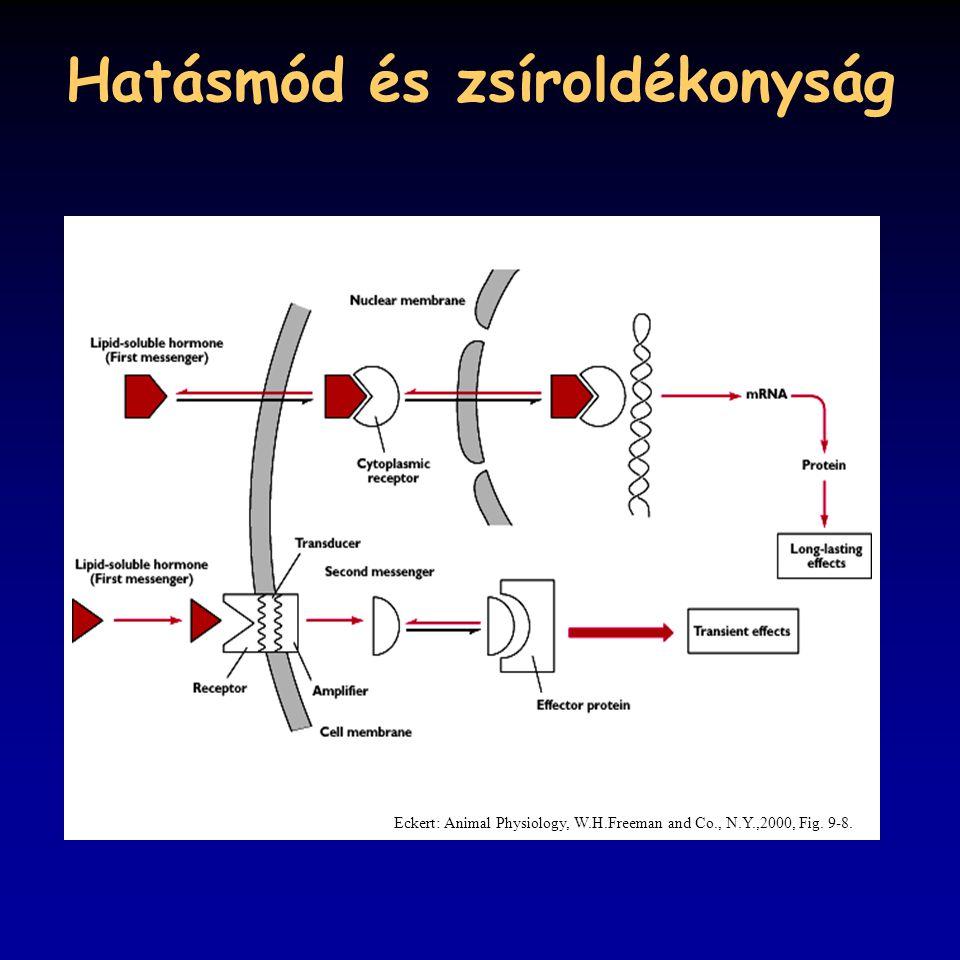 Hatásmód és zsíroldékonyság Eckert: Animal Physiology, W.H.Freeman and Co., N.Y.,2000, Fig. 9-8.