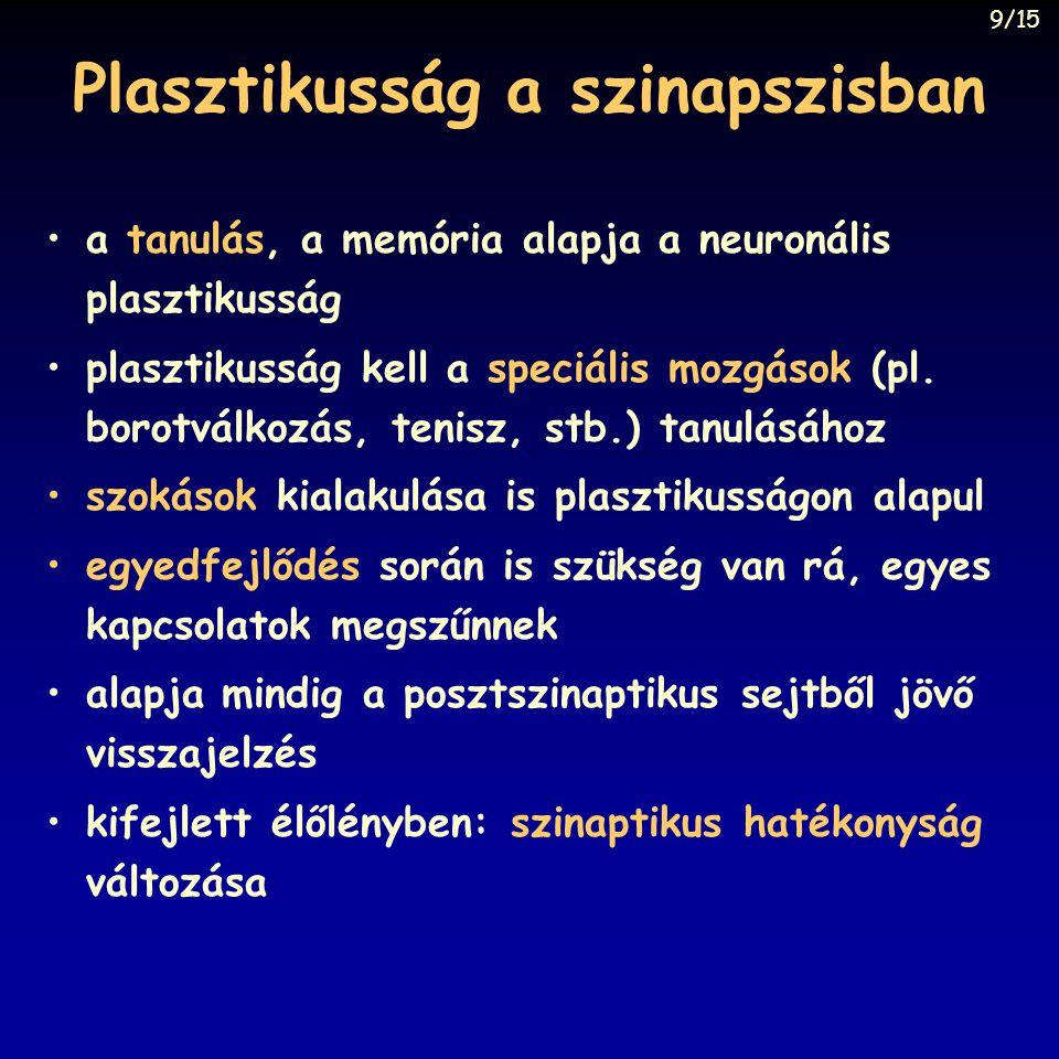 Plasztikusság a szinapszisban a tanulás, a memória alapja a neuronális plasztikusság plasztikusság kell a speciális mozgások (pl.