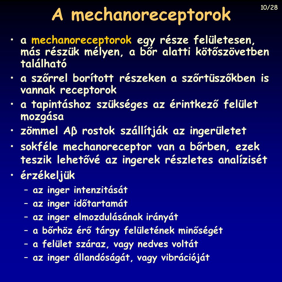 A mechanoreceptorok a mechanoreceptorok egy része felületesen, más részük mélyen, a bőr alatti kötőszövetben található a szőrrel borított részeken a s