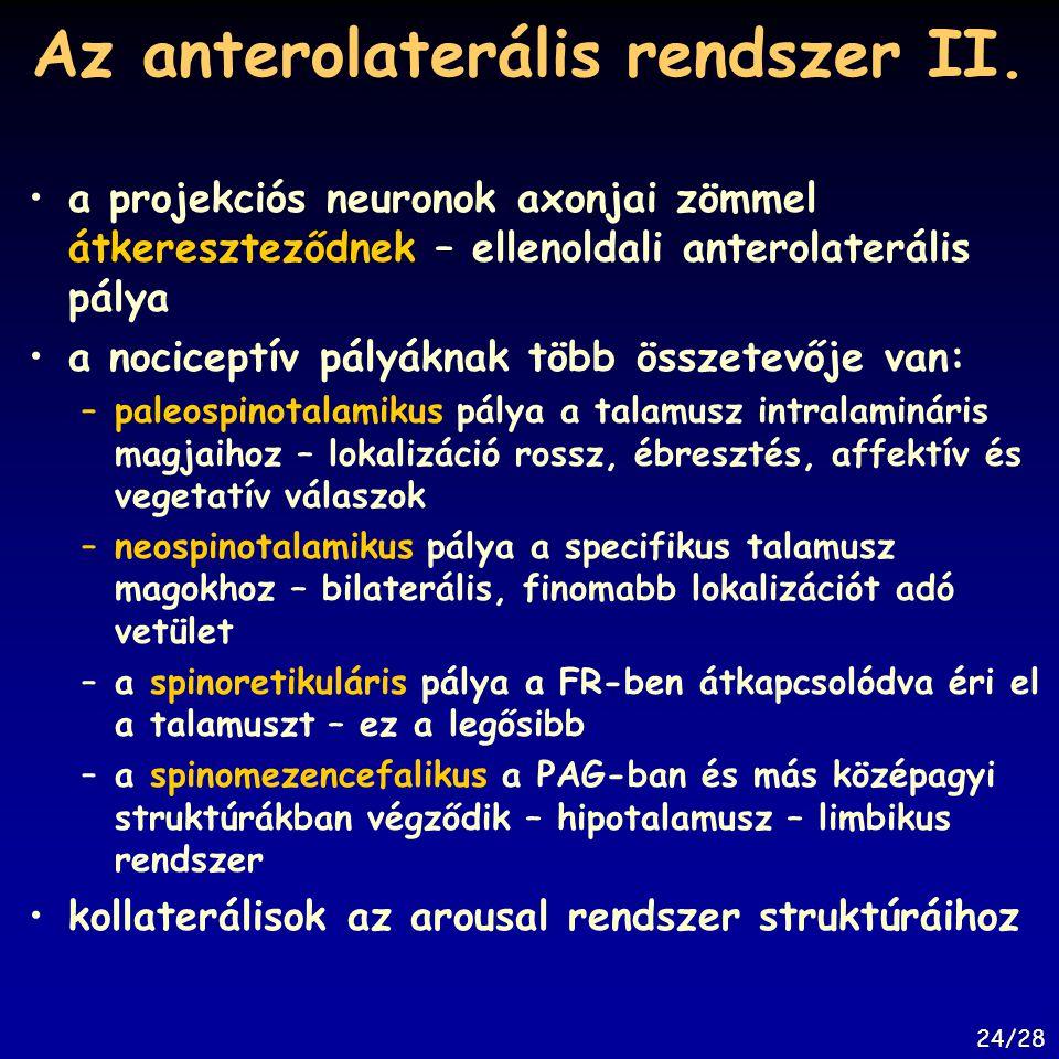 Az anterolaterális rendszer II. a projekciós neuronok axonjai zömmel átkereszteződnek – ellenoldali anterolaterális pálya a nociceptív pályáknak több