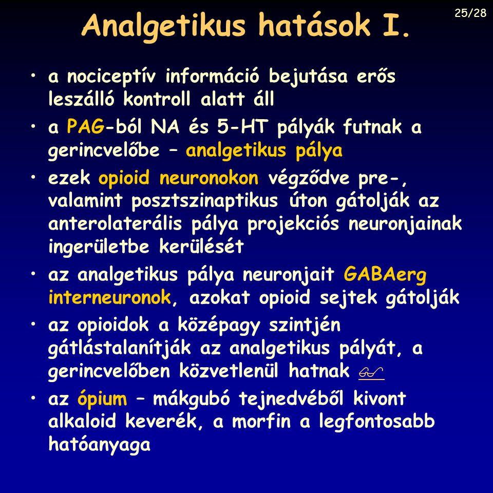 Analgetikus hatások I. a nociceptív információ bejutása erős leszálló kontroll alatt áll a PAG-ból NA és 5-HT pályák futnak a gerincvelőbe – analgetik