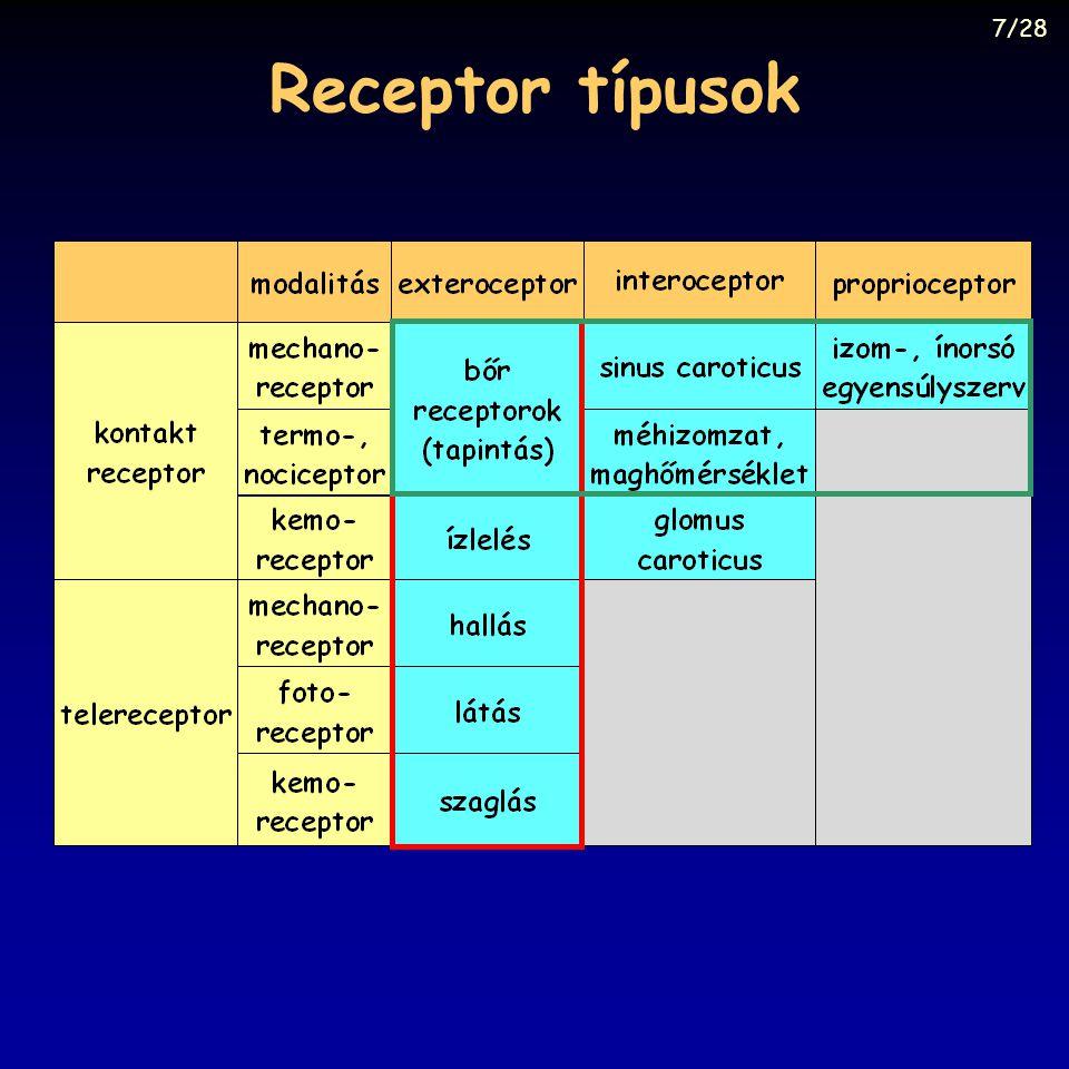 Receptor típusok 7/28