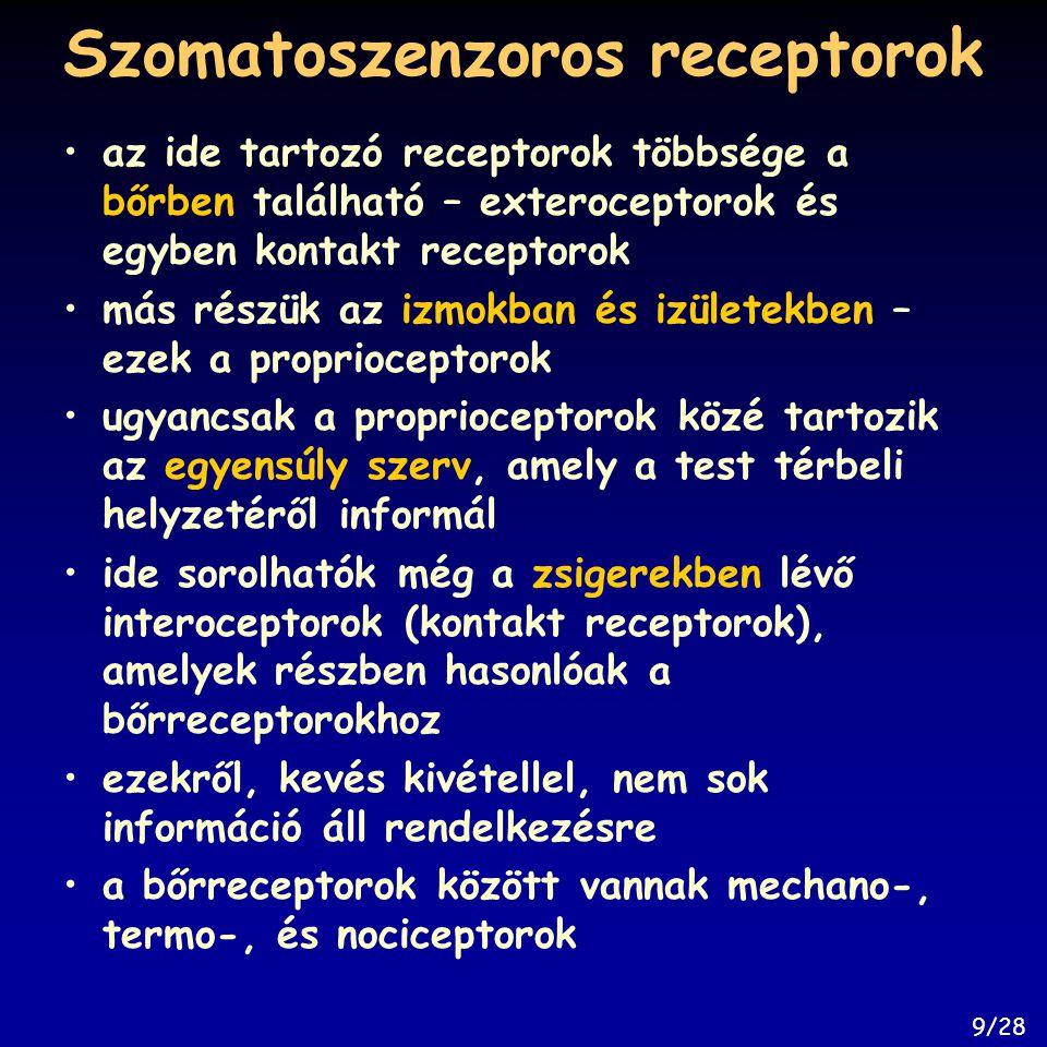 Szomatoszenzoros receptorok az ide tartozó receptorok többsége a bőrben található – exteroceptorok és egyben kontakt receptorok más részük az izmokban