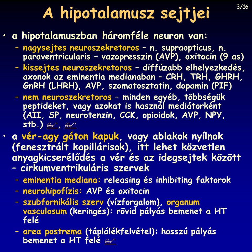 A hipotalamusz sejtjei a hipotalamuszban háromféle neuron van: –nagysejtes neuroszekretoros – n. supraopticus, n. paraventricularis – vazopresszin (AV