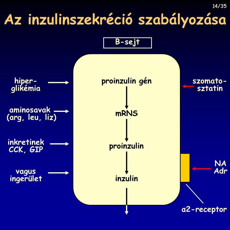 Az inzulinszekréció szabályozása B-sejt inkretinek CCK, GIP hiper- glikémia aminosavak (arg, leu, liz) vagus ingerület α2-receptor szomato- sztatin NA