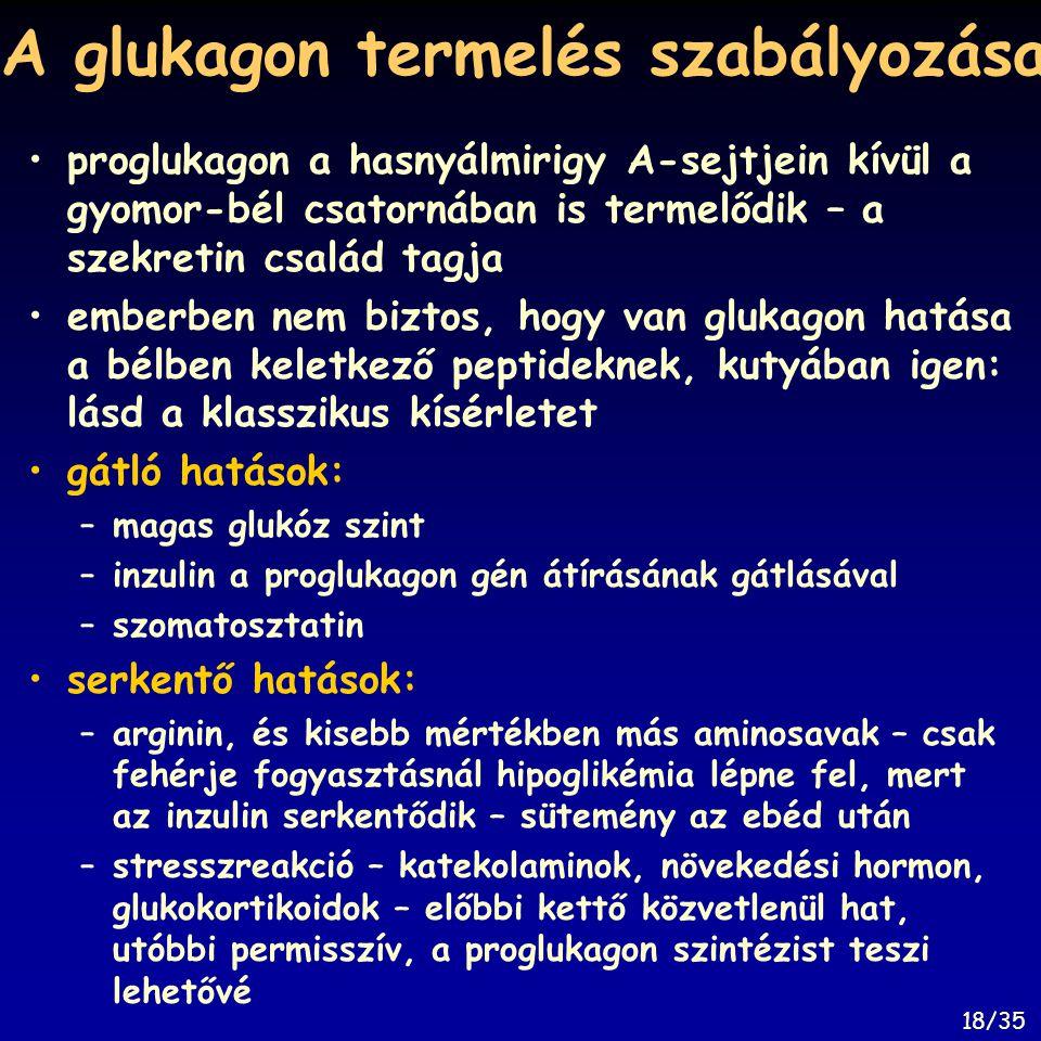 A glukagon termelés szabályozása proglukagon a hasnyálmirigy A-sejtjein kívül a gyomor-bél csatornában is termelődik – a szekretin család tagja emberb