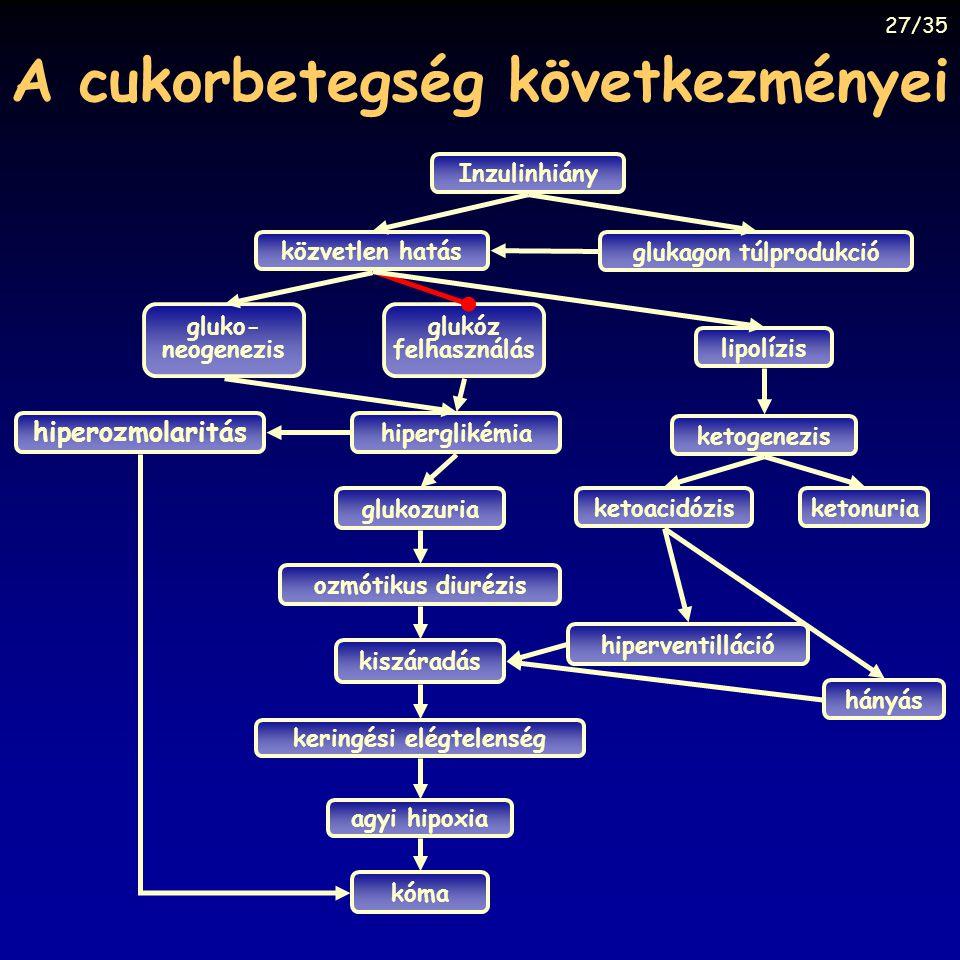 A cukorbetegség következményei közvetlen hatás Inzulinhiány gluko- neogenezis hiperglikémia glukozuria ozmótikus diurézis kiszáradás keringési elégtel