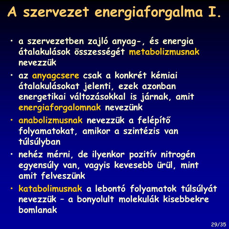 A szervezet energiaforgalma I. a szervezetben zajló anyag-, és energia átalakulások összességét metabolizmusnak nevezzük az anyagcsere csak a konkrét