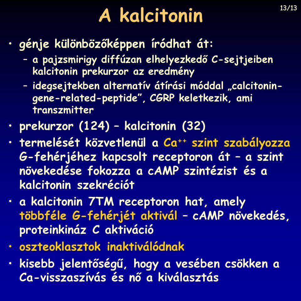 A kalcitonin génje különbözőképpen íródhat át: –a pajzsmirigy diffúzan elhelyezkedő C-sejtjeiben kalcitonin prekurzor az eredmény –idegsejtekben alter
