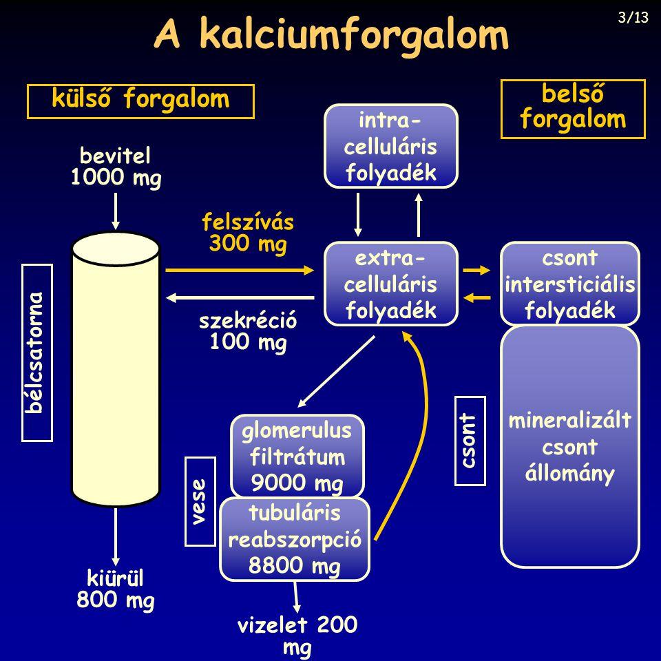 A kalciumforgalom intra- celluláris folyadék extra- celluláris folyadék glomerulus filtrátum 9000 mg tubuláris reabszorpció 8800 mg csont intersticiál