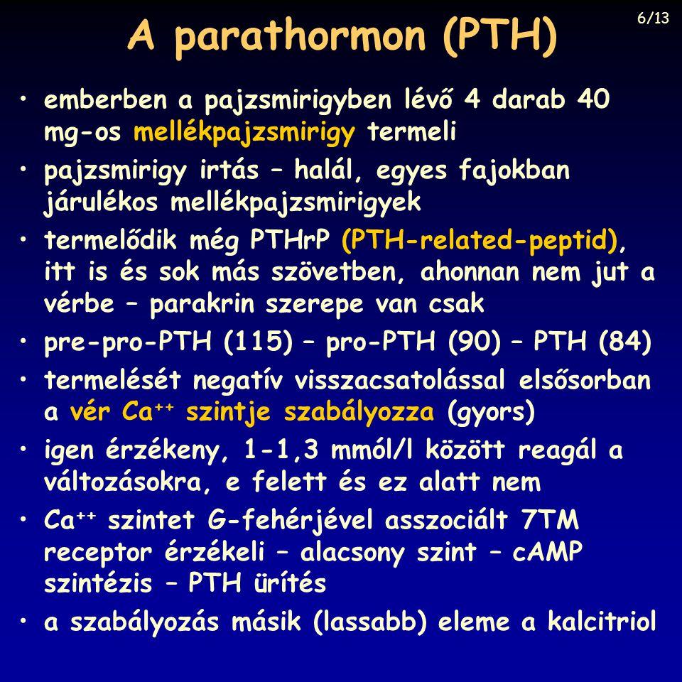 A parathormon (PTH) emberben a pajzsmirigyben lévő 4 darab 40 mg-os mellékpajzsmirigy termeli pajzsmirigy irtás – halál, egyes fajokban járulékos mell