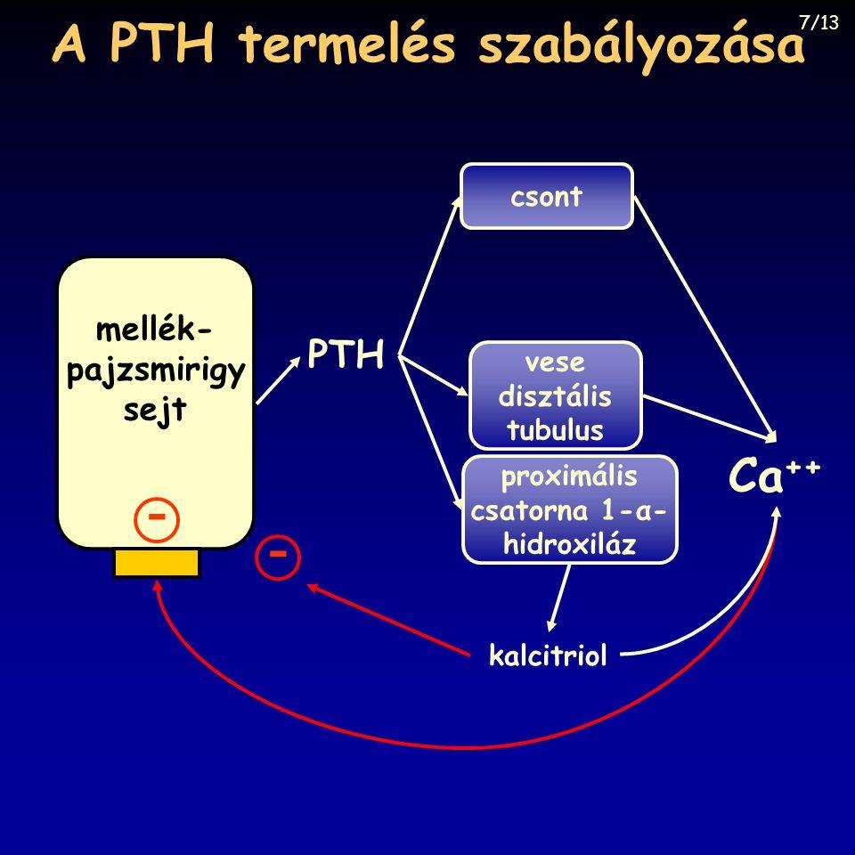 A PTH termelés szabályozása csont mellék- pajzsmirigy sejt Ca ++ proximális csatorna 1-α- hidroxiláz vese disztális tubulus PTH - kalcitriol - 7/13
