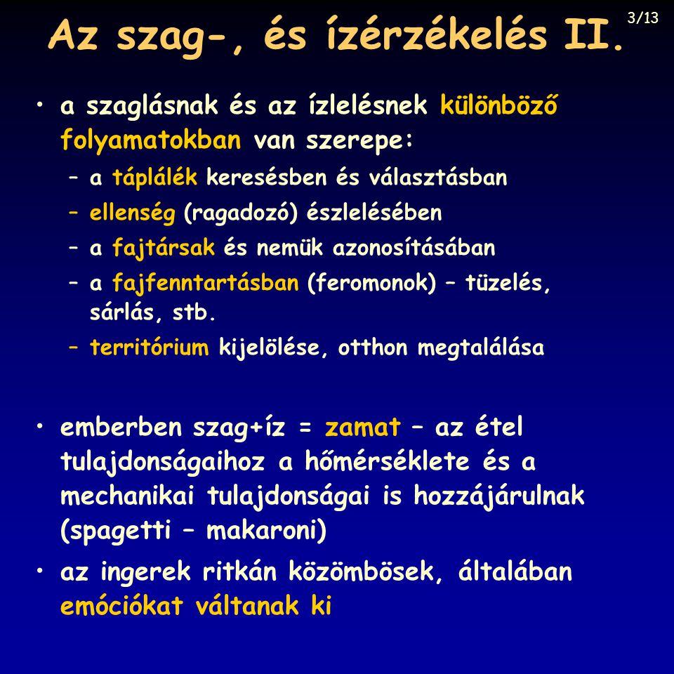 Az szag-, és ízérzékelés II.