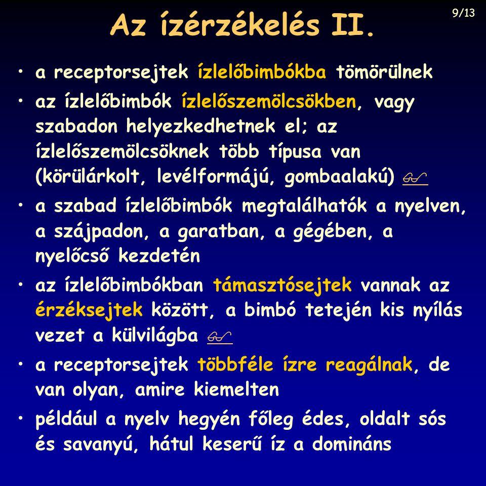 Az ízérzékelés II.