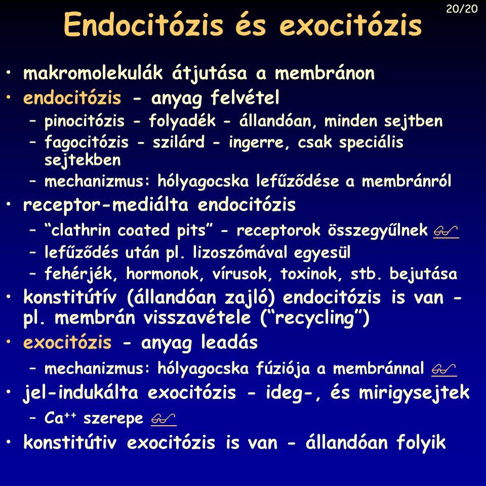 Endocitózis és exocitózis makromolekulák átjutása a membránon endocitózis - anyag felvétel –pinocitózis - folyadék - állandóan, minden sejtben –fagoci