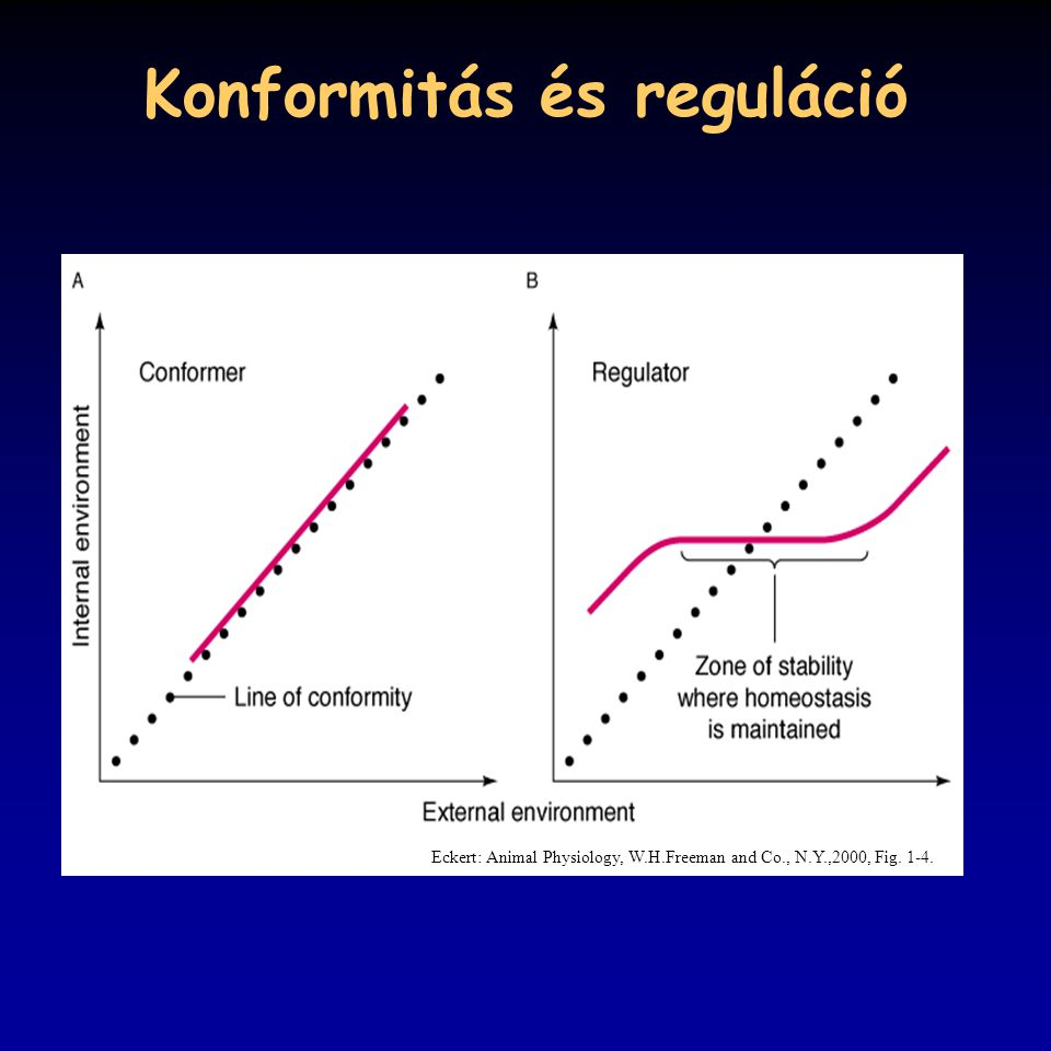 Konformitás és reguláció Eckert: Animal Physiology, W.H.Freeman and Co., N.Y.,2000, Fig. 1-4.