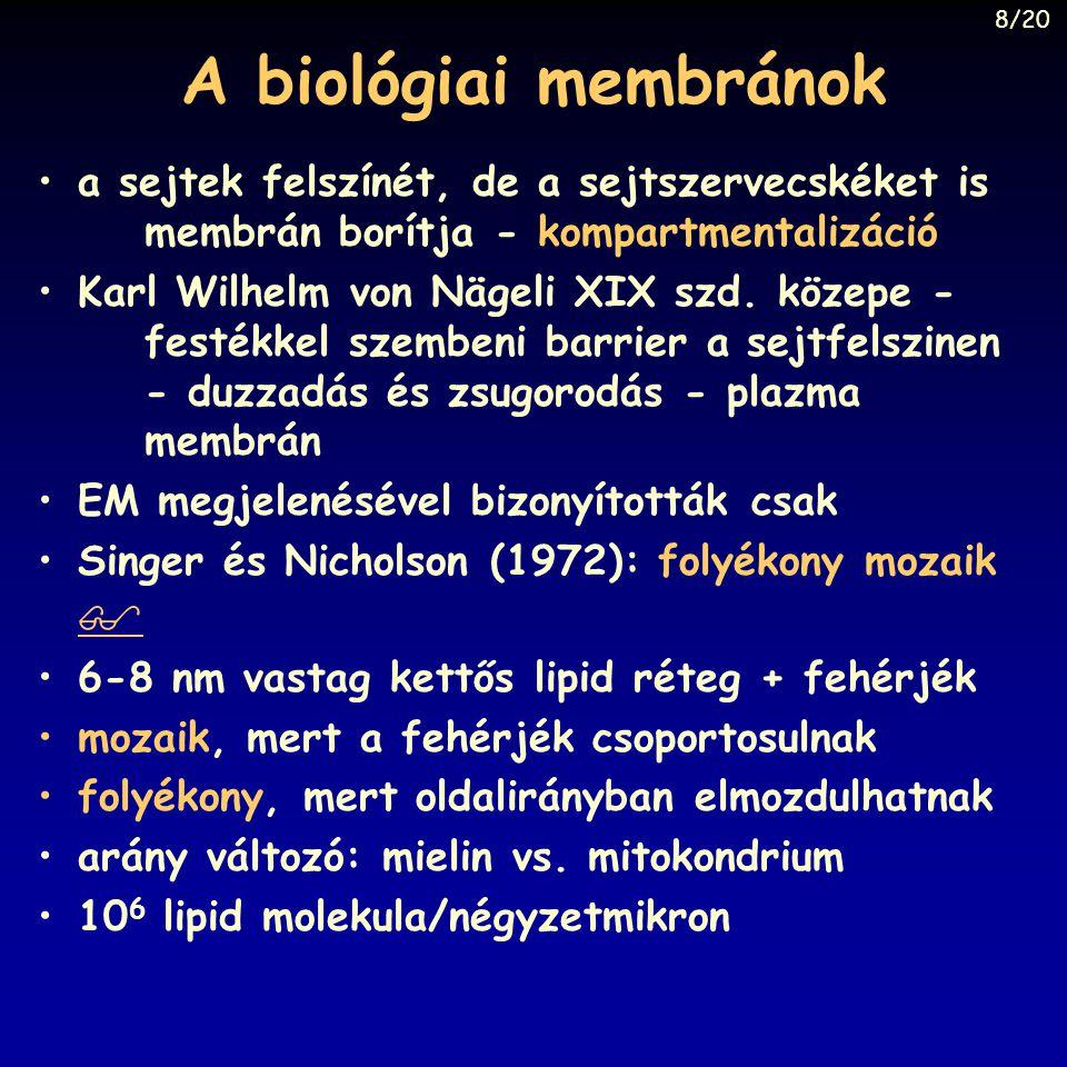 A biológiai membránok a sejtek felszínét, de a sejtszervecskéket is membrán borítja - kompartmentalizáció Karl Wilhelm von Nägeli XIX szd. közepe - fe
