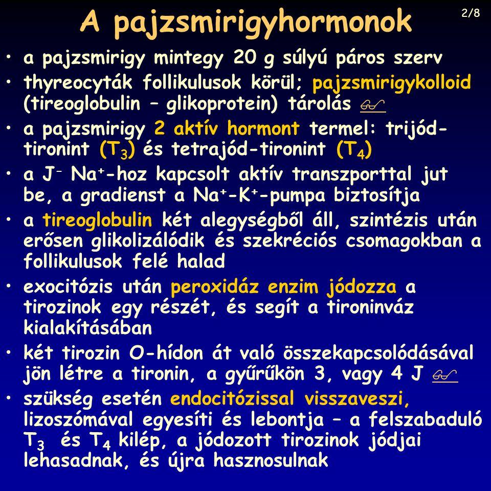 A pajzsmirigyhormonok a pajzsmirigy mintegy 20 g súlyú páros szerv thyreocyták follikulusok körül; pajzsmirigykolloid (tireoglobulin – glikoprotein) t
