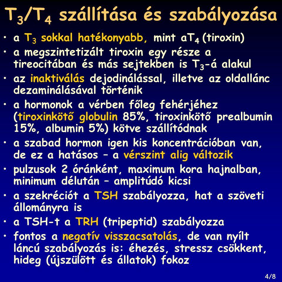 T 3 /T 4 szállítása és szabályozása a T 3 sokkal hatékonyabb, mint aT 4 (tiroxin) a megszintetizált tiroxin egy része a tireocitában és más sejtekben