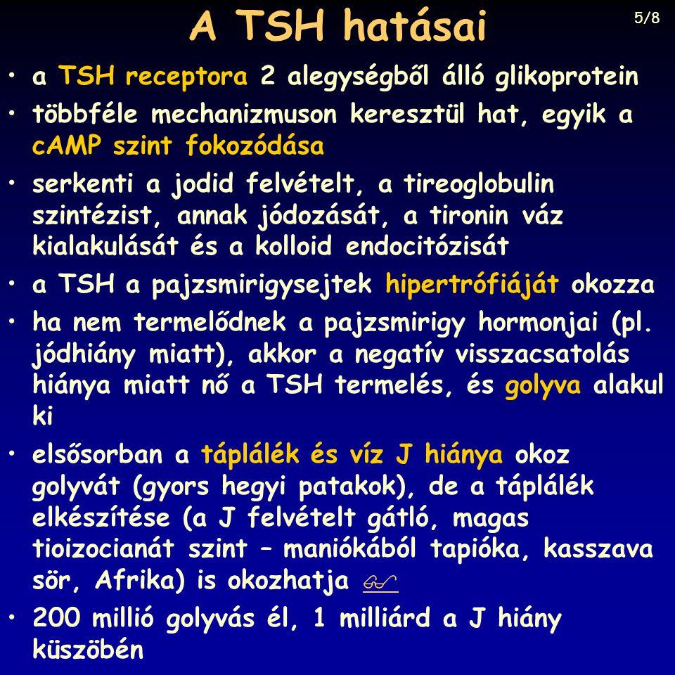 A TSH hatásai a TSH receptora 2 alegységből álló glikoprotein többféle mechanizmuson keresztül hat, egyik a cAMP szint fokozódása serkenti a jodid fel