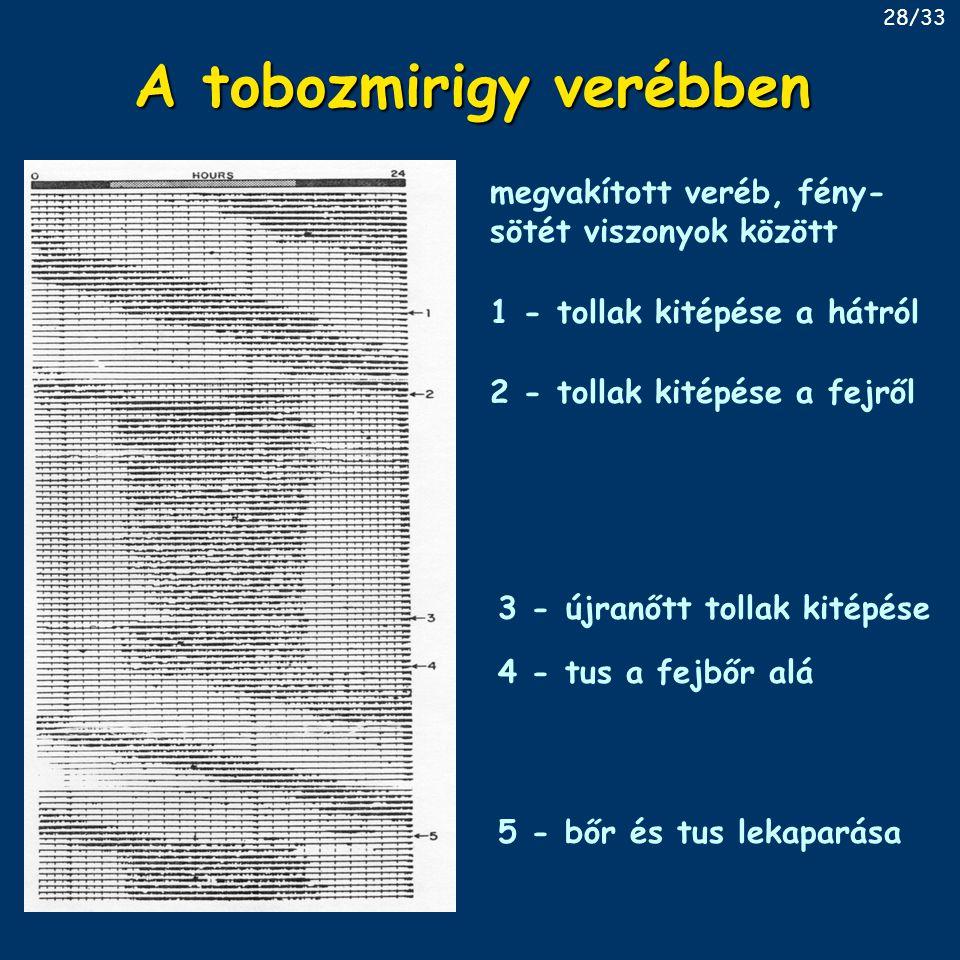 A tobozmirigy verébben 1 - tollak kitépése a hátról 2 - tollak kitépése a fejről 3 - újranőtt tollak kitépése 4 - tus a fejbőr alá 5 - bőr és tus lekaparása megvakított veréb, fény- sötét viszonyok között 28/33