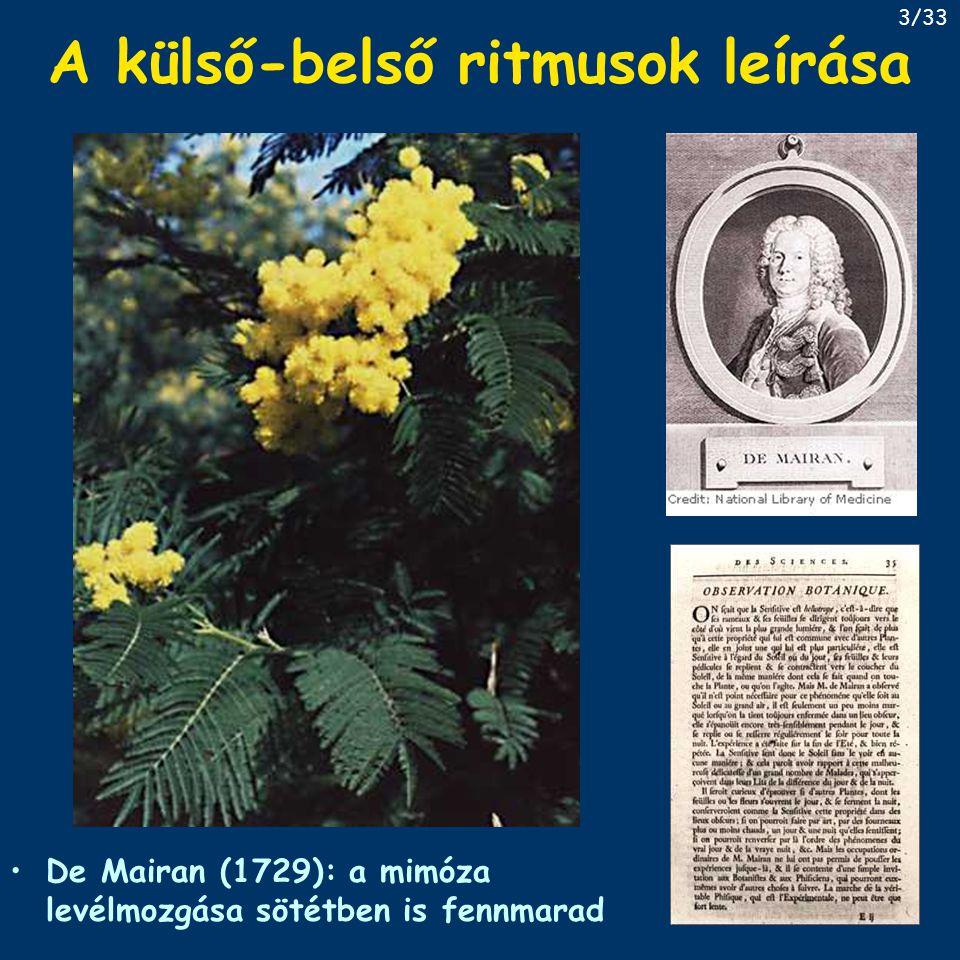 A külső-belső ritmusok leírása De Mairan (1729): a mimóza levélmozgása sötétben is fennmarad 3/33