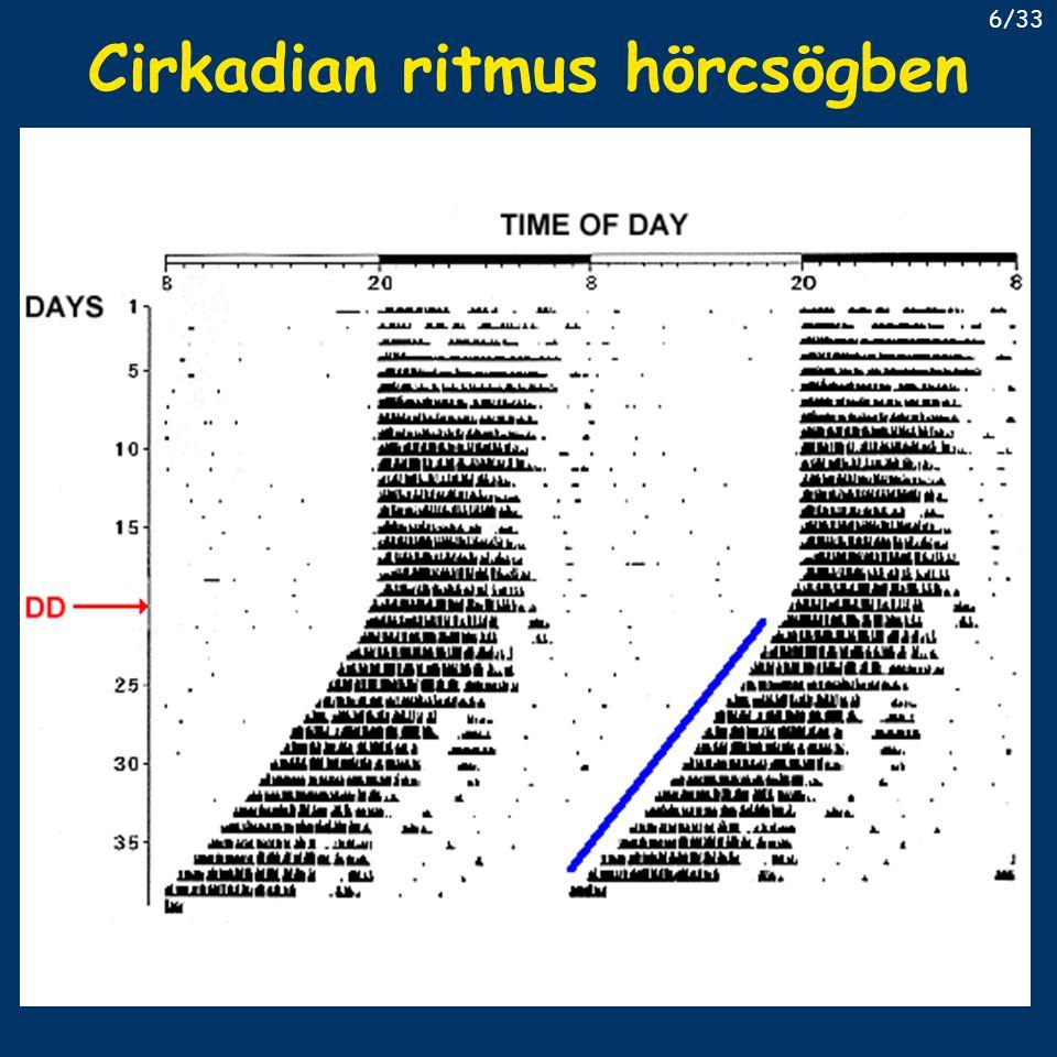 Az óragének felfedezése 1985 – Martin Ralph – tau-mutáns hörcsög állandó sötétben rövid periódus idő, mendeli öröklésmenet (20/22/24) áttörés 1994-ben forward genetikai megközelítéssel – Vitaterna (PhD-s) Clock mutáns az első 42 egér között a mutáció hatására kiesett egy glu-ban gazdag régió, ami a bHLH tipusú transzkripciós faktorokra jellemző a géntermék tehát transzkripciós faktor van benne egy PAS domain is – dimerizáció lehetősége más hasonló fehérjékkel 17/33