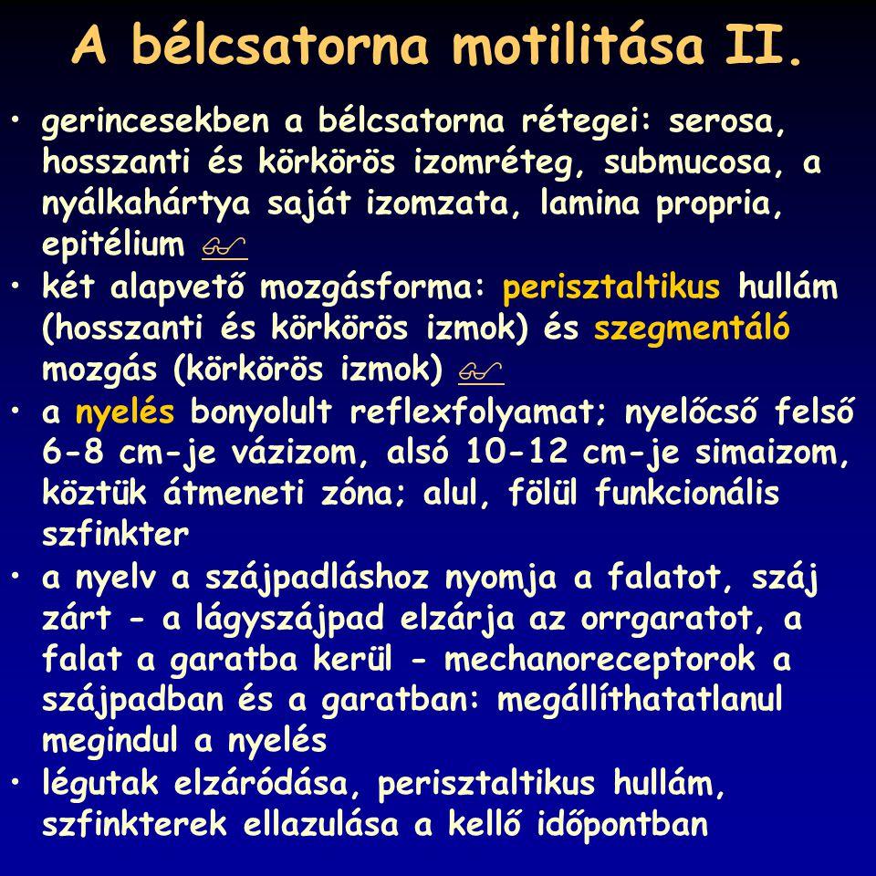 A bélcsatorna motilitása II. gerincesekben a bélcsatorna rétegei: serosa, hosszanti és körkörös izomréteg, submucosa, a nyálkahártya saját izomzata, l