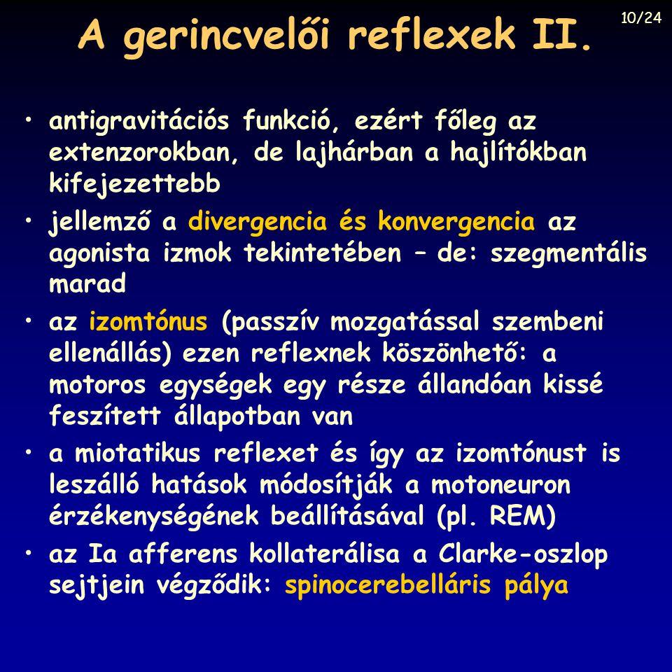 A gerincvelői reflexek II. antigravitációs funkció, ezért főleg az extenzorokban, de lajhárban a hajlítókban kifejezettebb jellemző a divergencia és k